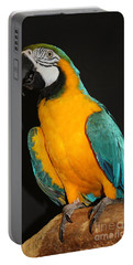 Macaw Hanging Out Portable Battery Charger by John Telfer