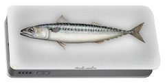 Mackerel Scomber Scombrus  - Maquereau - Caballa - Sarda - Scombro - Makrilli - Seafood Art Portable Battery Charger