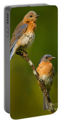 Portable Battery Charger featuring the photograph Male And Female Bluebirds by Jerry Fornarotto