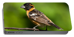 Male Black Headed Grosbeak In A Tree Portable Battery Charger