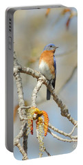 Male Bluebird In Budding Tree Portable Battery Charger by Robert Frederick