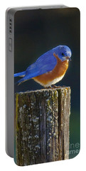 Male Bluebird Portable Battery Charger