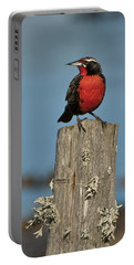 Male Long-tailed Meadowlark On Fencepost Portable Battery Charger