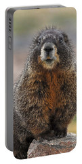 Portable Battery Charger featuring the photograph Marmot by Mae Wertz