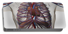 Medical Illustration Of Male Chest Portable Battery Charger