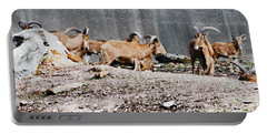 Meeting Of Barbary Sheep Portable Battery Charger