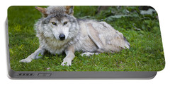 Portable Battery Charger featuring the photograph Mexican Gray Wolf by Sebastian Musial