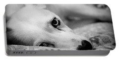 Portable Battery Charger featuring the photograph Miss Donut  by Faith Williams