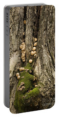 Portable Battery Charger featuring the photograph Moss-shrooms On A Tree by Carol Lynn Coronios