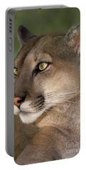 Mountain Lion Portrait Wildlife Rescue Portable Battery Charger