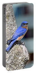 Portable Battery Charger featuring the photograph Mr Bluebird by Carol  Bradley