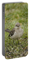 Northern Mockingbird Portable Battery Charger by Heather Applegate
