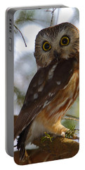 Northern Saw-whet Owl II Portable Battery Charger
