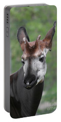 Portable Battery Charger featuring the photograph Okapi #2 by Judy Whitton