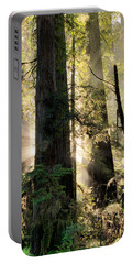 Old Growth Forest Light Portable Battery Charger