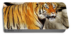 Portable Battery Charger featuring the photograph On The Prowl by Jason Politte
