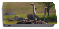 Ostriches Portable Battery Charger by Dan Sproul