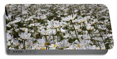 Ox Eye Daisies Portable Battery Charger