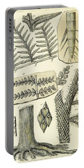 Paleozoic Flora, Calamites, Illustration Portable Battery Charger