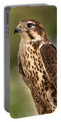 Portable Battery Charger featuring the photograph Peregrine Falcon Portrait by David Millenheft