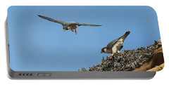 Peregrine Falcons - 6  Portable Battery Charger
