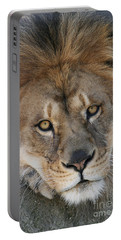 Pet Me Portable Battery Charger by Judy Whitton