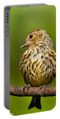 Pine Siskin With Yellow Coloration Portable Battery Charger
