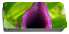 Plum Purple Calla Lilly Flower In The Garden Portable Battery Charger