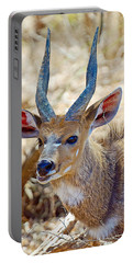 Portrait Of A Bushbuck In Kruger National Park-south Africa  Portable Battery Charger