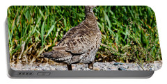 Portable Battery Charger featuring the photograph Prairie Chicken Run by Janice Rae Pariza