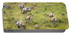 Pronghorn Antelope In Lamar Valley Portable Battery Charger by Belinda Greb