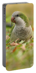 Quaker Parrot #3 Portable Battery Charger