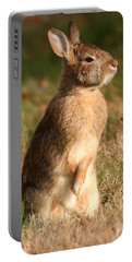 Rabbit Standing In The Sun Portable Battery Charger