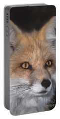 Portable Battery Charger featuring the photograph Red Fox Portrait Wildlife Rescue by Dave Welling