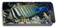 Red Sea Beauty Zebrasoma Portable Battery Charger