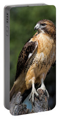 Red Tail Hawk Portrait Portable Battery Charger