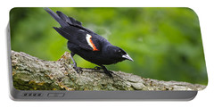 Red Winged Blackbird Portable Battery Charger by Christina Rollo