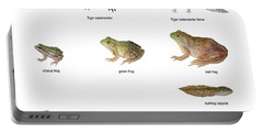 Relative Amphibian Sizes Portable Battery Charger by Carlyn Iverson