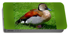 Portable Battery Charger featuring the photograph Ringed Teal Drake by Rona Black