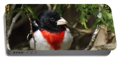 Rose Breasted Grosbeak Perched Portable Battery Charger