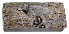 Portable Battery Charger featuring the photograph Running Timber Wolf by Wolves Only