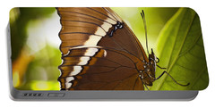 Portable Battery Charger featuring the photograph Rusty Tip Butterfly by Bradley R Youngberg