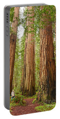 Scale - The Beautiful And Massive Giant Redwoods Sequoia Sempervirens In Redwood National Park. Portable Battery Charger