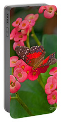 Scarlet Swallowtail Butterfly On Crown Of Thorns Flowers Portable Battery Charger