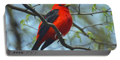 Scarlet Tanager In The Forest Portable Battery Charger by Rodney Campbell