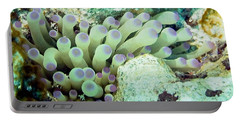 Portable Battery Charger featuring the photograph Sea Anemone With Squat Anemone Shrimp Family by Amy McDaniel