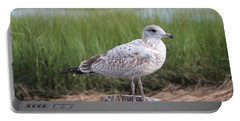 Portable Battery Charger featuring the photograph Seagull by Karen Silvestri