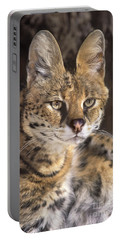 Portable Battery Charger featuring the photograph Serval Portrait Wildlife Rescue by Dave Welling