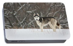 Portable Battery Charger featuring the photograph Siberian Husky 20 by David Dunham