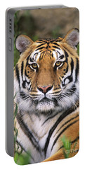 Siberian Tiger Staring Endangered Species Wildlife Rescue Portable Battery Charger